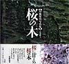 【送料無料】桜の木