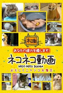 【送料無料】ネコネコ動画 〜おもしろニャンコ大集合〜