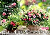 12ヶ月の小さな花のある暮らしFlowers&Plants(2018)