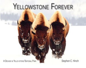 Yellowstone Forever: A Decade in Yellowstone National Park YELLOWSTONE FOREVER [ Stephen C. Hinch ]