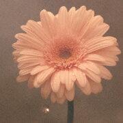 花は咲く(CD+DVD)