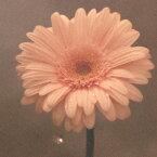 NHK「明日へ」東日本大震災復興支援ソング::花は咲く [ 花は咲くプロジェクト ]