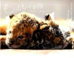 もふもふ日誌 仔トラと仔ライオン、ときどきウサギ [ 九州自然動物公園アフリカンサファリ ]