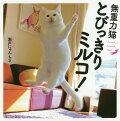 無重力猫とびっきりミルコ!