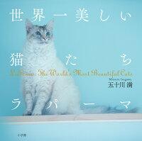世界一美しい猫たち ラパーマ