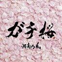 カラオケで人気の桜ソング・桜の曲「湘南乃風」の「ガチ桜」を収録したCDのジャケット写真。