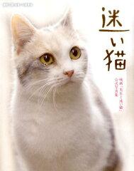 【楽天ブックスならいつでも送料無料】迷い猫 [ 関由香 ]