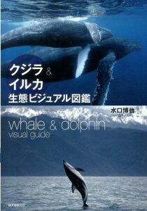 【楽天ブックスならいつでも送料無料】クジラ&イルカ生態ビジュアル図鑑 [ 水口博也 ]