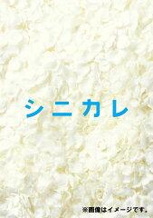 【送料無料】シニカレ完全版 DVD-BOX [ 藤ヶ谷太輔 ]