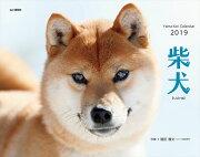 カレンダー2019 柴犬