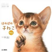 カレンダー2019 ほのぼの子ねこ mini