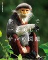 動物園でもイケメンと話題のゴリラ、ペットとしても人気のリスザル、哺乳類には珍しく毒をもつスローロリス、童謡でも有名なアイアイ、日本人にはおなじみのニホンザルから、ヒトに最も近いチンパンジーやボノボまで。知っているようであまり知らない世界中のサル約130種を、「南米」、「アジア」、「マダガスカル」、「アフリカ」の4つの地域ごとに紹介。厳選された美しい写真と、現役の研究者によって書かれた最先端の解説で楽しめる、めくるめくサルたちの物語がここに!