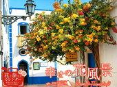 幸せの花風景Romantic Flowersカレンダー