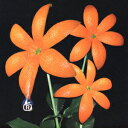 男性のカラオケでモテる曲 「オレンジレンジ」の「花」を収録したCDのジャケット写真。