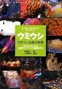 【送料無料】ウミウシ生きている海の妖精 [ 加藤昌一 ]