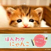 ましかく猫カレンダーほんわかにゃんこ