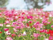 心に残る癒やしの花風景 Beautiful Flower Garden in Y