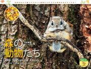 太田達也セレクション森の動物たちTiny Story in the Forest