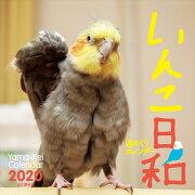 カレンダー2020 週めくりカレンダー いんこ日和