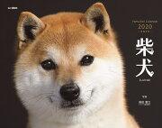 柴犬カレンダー(2020)