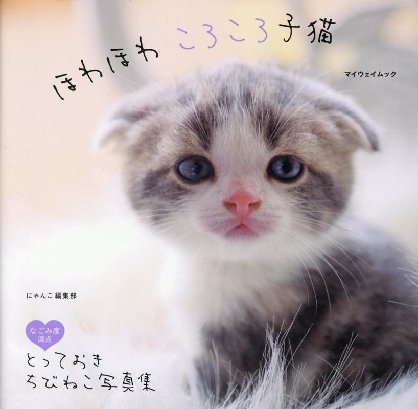 ほわほわころころ子猫