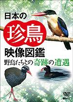 【送料無料】日本の珍鳥 映像図鑑 野鳥たちとの奇跡の遭遇