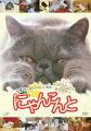 にゃんこんと くすっと笑えるネコネコ動画 〜ホントはこんなこと言ってたりして〜