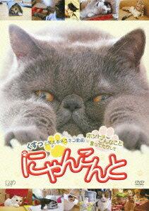 【送料無料】にゃんこんと くすっと笑えるネコネコ動画 〜ホントはこんなこと言ってたりして〜