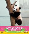 【卓上】万年日めくりシャンシャン カレンダー
