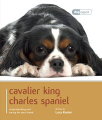 Cavalier King Charles [ Lucy Koster ][楽天ブックス]