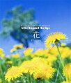 virtual trip 花 Flowers 四季の山野草と高山植物【Blu-ray】