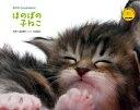 ほのぼの子猫2010年カレンダー通販