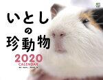 いとしの珍動物カレンダー 壁掛け(2020)