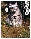 【楽天ブックスならいつでも送料無料】飼い猫志願 [ ささじまるりこ ]
