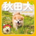 むくむくもふもふ秋田犬カレンダー 2021
