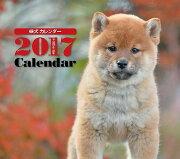 2017年ミニカレンダー 柴犬