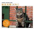 カレンダー2021 岩合光昭×ねこ (週めくり・卓上/壁掛け・リング)
