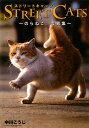 【送料無料】Street cats
