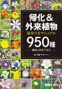 帰化&外来植物 見分け方マニュアル950 種 [ 森 昭彦