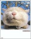 【送料無料】かご猫