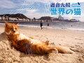 岩合光昭世界の猫カレンダー(2019)壁掛け