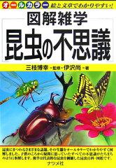 【送料無料】昆虫の不思議 [ 伊沢尚 ]
