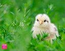 小鳥大好き! カレンダー2016