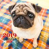 2019年大判カレンダー パグ