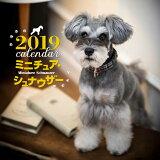 2019年大判カレンダー ミニチュア・シュナウザー
