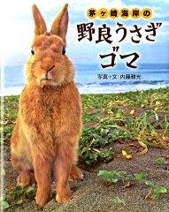 【送料無料】茅ケ崎海岸の野良うさぎゴマ [ 内藤雅光 ]