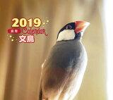 2019年ミニカレンダー 文鳥