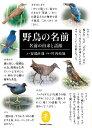 野鳥の名前 (ヤマケイ文庫)