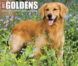 Just Goldens 2020 Box Calendar (Dog Breed Calendar) JUST GOLDENS 2020 BOX CAL (DOG [ Willow Creek Press ]