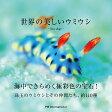 世界の美しいウミウシ [ パイインターナショナル ]